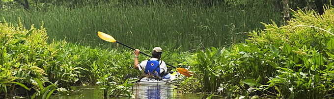 A kayaker paddles through a densely vegetated area.