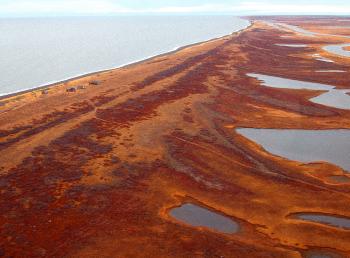 Aerial image of Cape Krusenstern coastline with fall colors, reds and oranges. The tundra is interspersed with bodies of water.