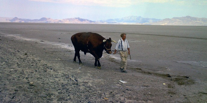 A man and an ox cross a sandy desert with mountains in the background