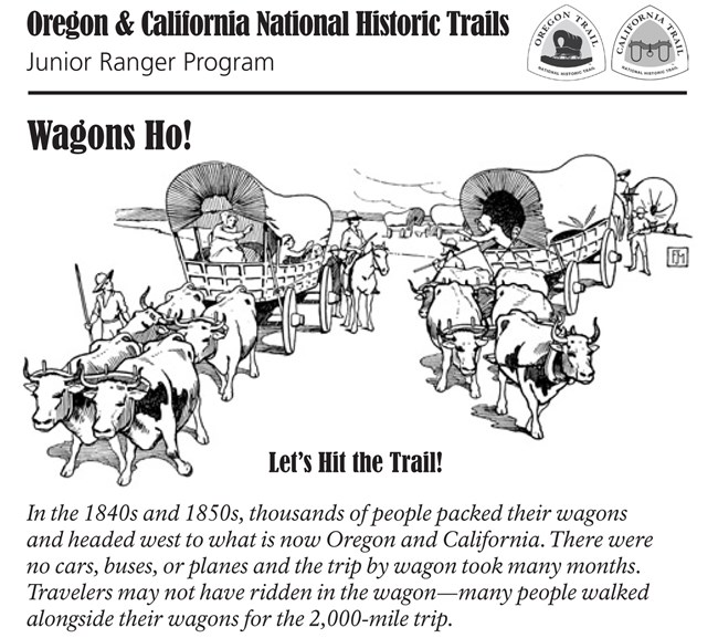 Oxen pulling wagons on dusty trail; Oregon and California trail Junior Ranger Program text