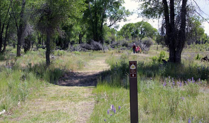A trail is lined with green grass and a thin brown sign with a logo on it sits on the side. Visitors can be seen in the background among cottonwood trees.