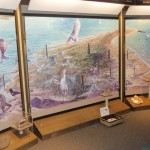Discovery Room at the Harkers Island Visitor Center