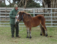Ocracoke Herd Manager Laura Michaels and Sacajawea