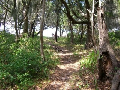 Maritime Forest on Shackleford