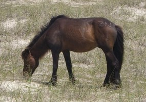 Horse grazing in sandy area