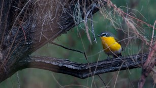 a bird with a bright yellow breast perches on a branch surrounded by green vegetation