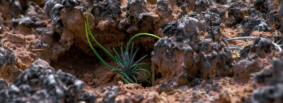 a tiny plant grows out of black and brown, knobby soil