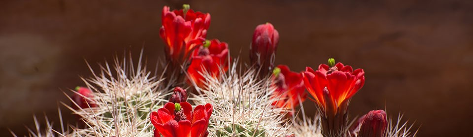 a cactus with red flowers