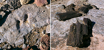 photo: Evidence of a lake environment: pieces of petrified wood (above right and a dinosaur track (left) provide more evidence that at one time Horseshoe Canyon was lakefront property.