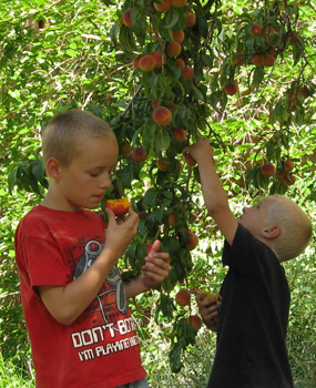 Kids in the Orchard