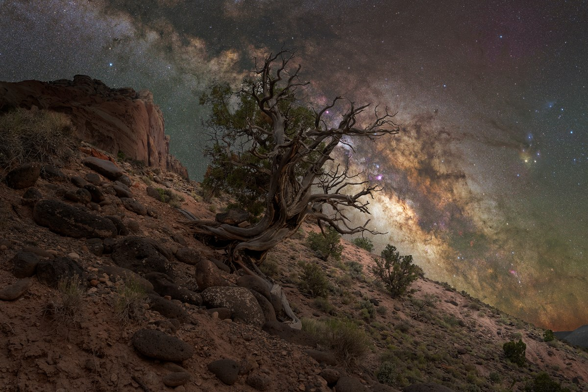 Gnarled tree clinging to rocky slope, with red cliffs, and the star-filled Milky Way arcing across a blue-green night sky.
