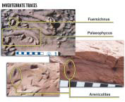 Invertebrate trace fossils of Fuersichnus,palaeophycus, Arenicolites. Known to occur at Glen Canyon National Recreation Area and Capitol Reef National Park.