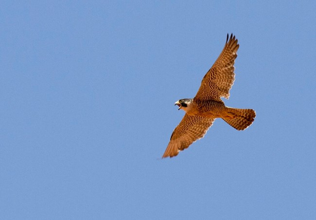 A soaring bird against clear blue sky