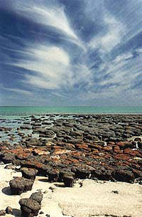 The best modern analogues to fossil stromatolites can be found in Shark Bay, Australia.