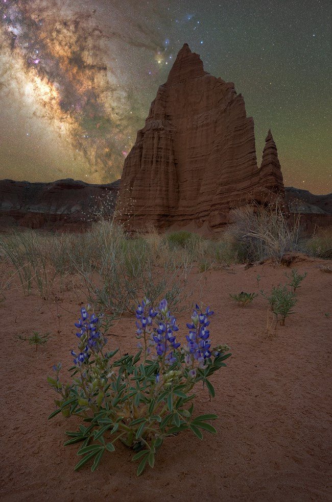 Blue flowers in the foreground with large red monolith and the night sky and Milky Way above.