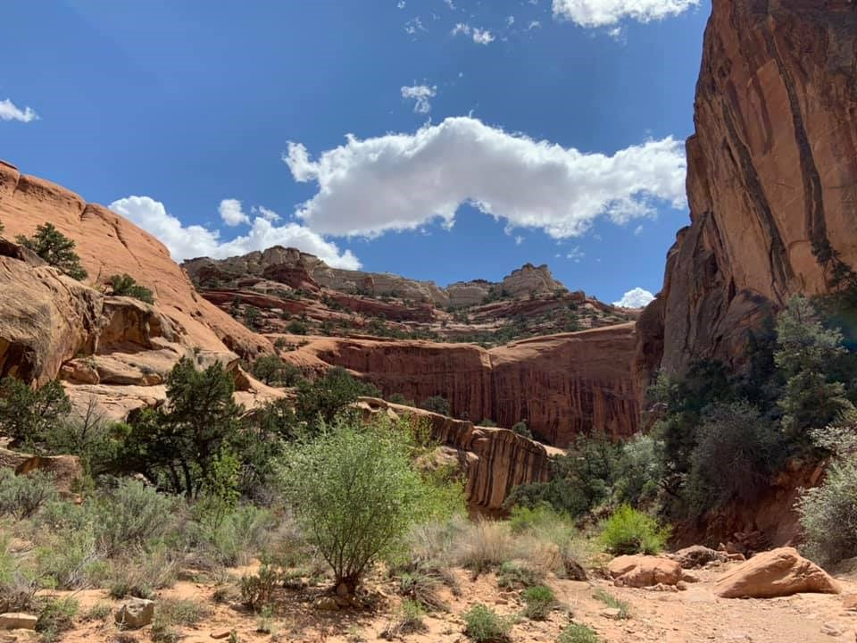 Deep canyon with green vegetation, striped rock faces, and blue sky with a few clouds above.