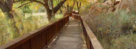 Petroglyph Panel boardwalk along wingate sandstone cliffs and surrounded by cottonwoods