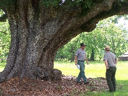 Ron and Jarred by tree
