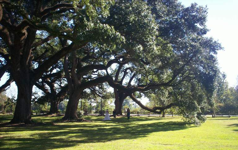 Wedding pictures under the live oaks