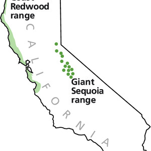 Map Where Sequoia And Redwood Trees Are Found - From park brochure