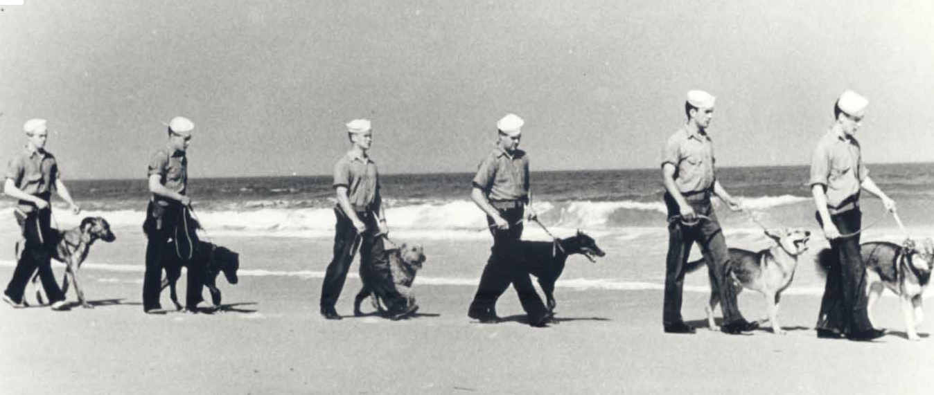 Coast Guardsmen patrol the beach with large dogs on leashes.