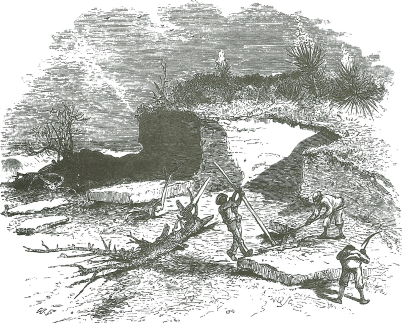 Workers use bars and pickaxes to cut coquina from a quarry.
