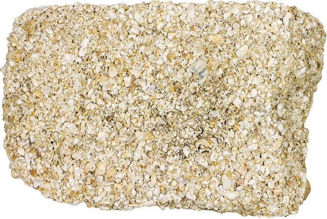 A close-up photo of coquina stone