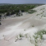 White sands and warm winds cover Anastasia State Park beach