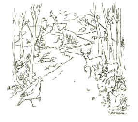 Line drawing of a road into the forest with woodland creatures lining the path.