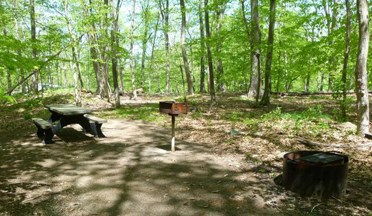 Photo of a picnic site at the Chestnut Picnic Area with universally accessible picnic table, grill, and trail (the Spicebush trail). There's also a restroom in the Chestnut Picnic Area with universal access.