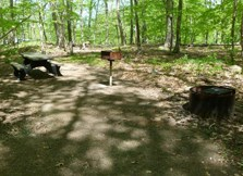 Chestnut Picnic Area showing picnic table and grill with universal access