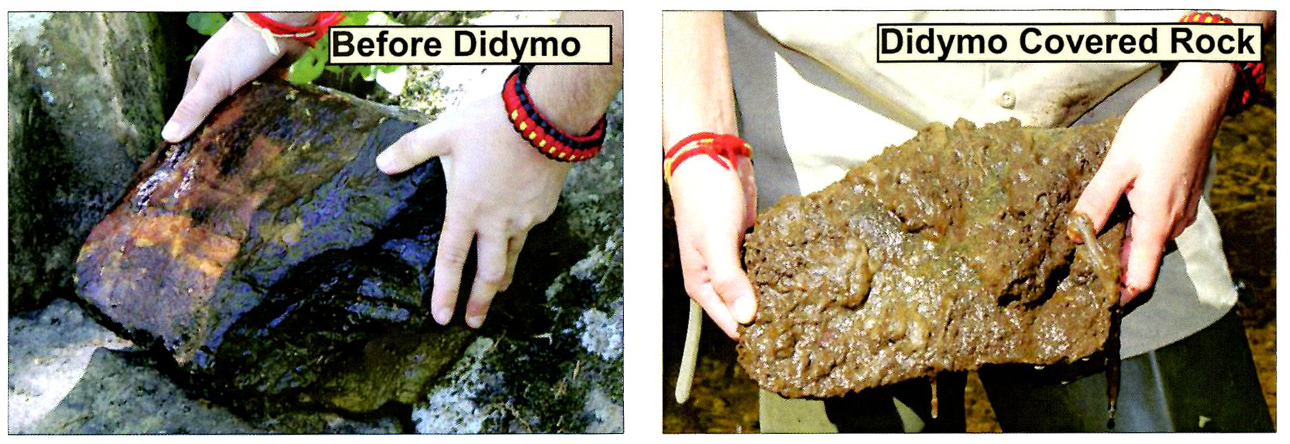 Rock before and after didymo