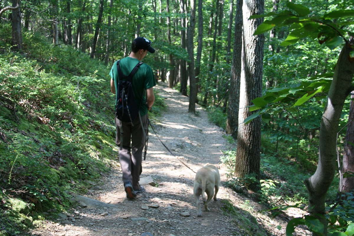 Hiker with leashed dog on trail