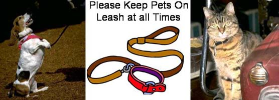 Image collage of dog on leash, Please keep pets on a leash at all times with picture of a leash, cat on a leash.