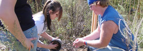 In November 2005, 10 volunteers ages 16 to 77—eight CDL students and two Chihuahuan Desert Alliance volunteers—worked alongside park staff to plant native trees at Rattlesnake Springs to restore habitat for the Bell's vireo. They planted 27 netleaf hackberry, western soapberry and Goodding's willow tree saplings. These saplings replaced Russian olive trees, which while providing the shrubby, dense habitat favored by the Bell's vireo, are a non-native species and were removed by the park's Exotic Plant Management Team.