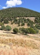 Forested slope on Capulin Volcano