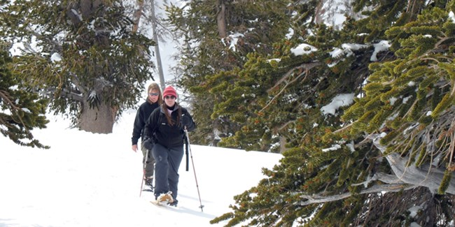 People on Guided Snowshoe Hike