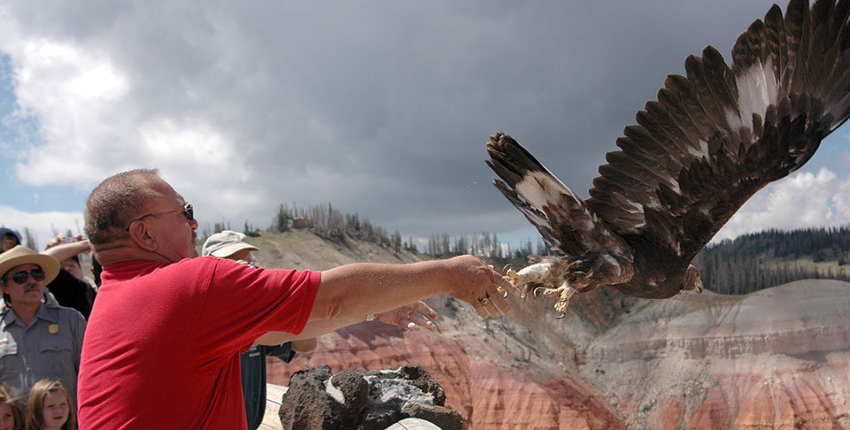 Man in red shirt releasing eagle off the rim of Cedar Breaks