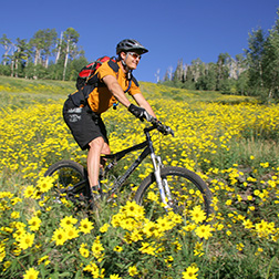 Mountain biker riding through meadow of flowers.