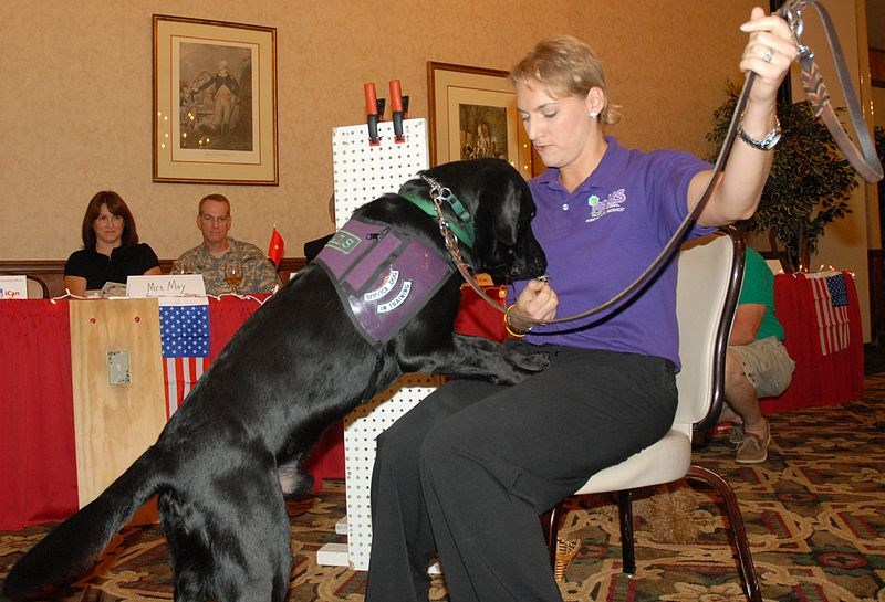 A service dog is getting keys for a US Army trainer in a demonstration.