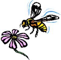 Drawing of bee and flower.