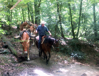 Mules on trail at CRNRA