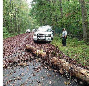Clearing downed tree across road in the Jones Bridge unit.