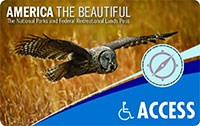 2020 Interagency Access Lifetime Pass with image of a soaring owl.