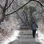A lone walker on a park trail in the midst of a snow storm.
