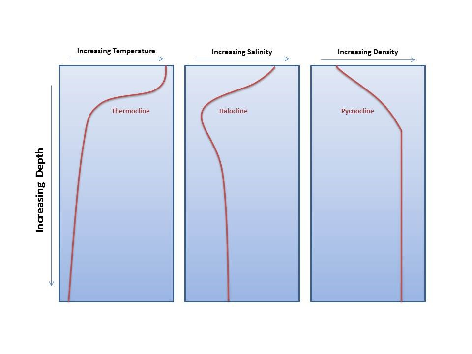 graphic showing thermocline, halocline, and pycnocline