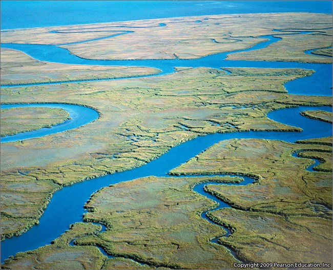 Aerial photograph of bright green estuary with blue river channels running through it.