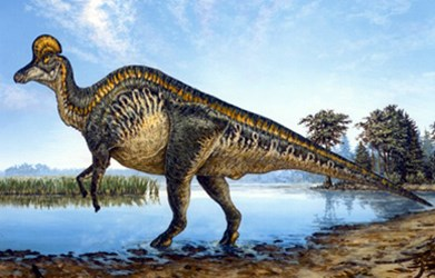 illustration of a hadrosaurid dinosaur with cranial ridge standing on hind legs at the edge of a pond.
