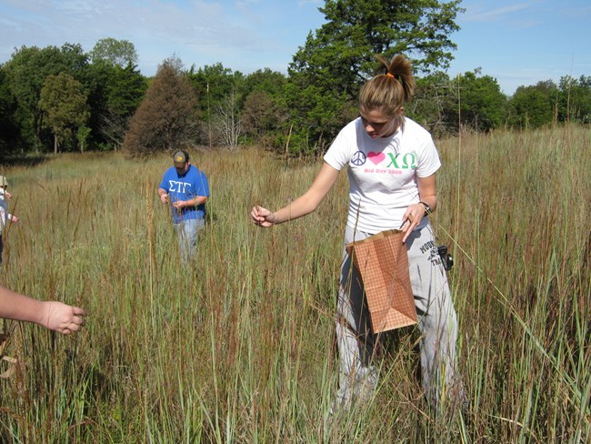 students collecting native grass seeds.