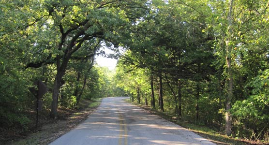 Trees hang down over a roadway.